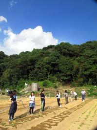 H24農業センター播種15.jpg